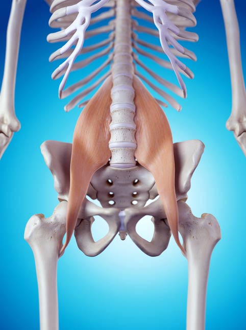 The Psoas muscle
